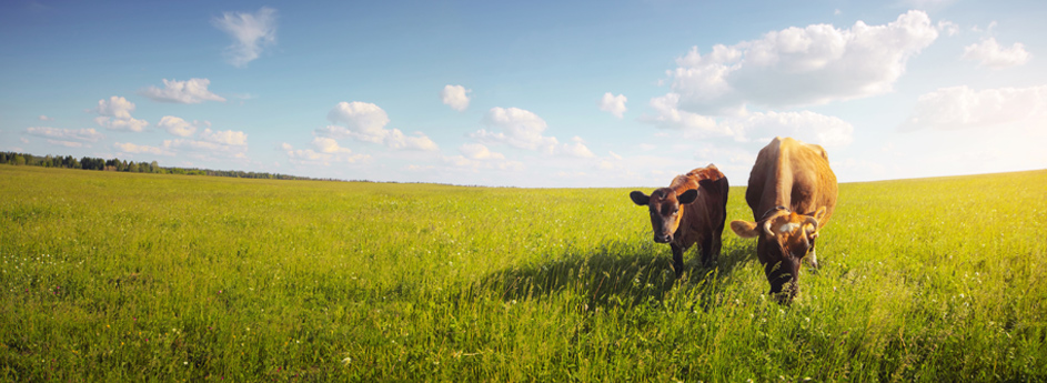 Boosting dairy production and profits the environmentally friendly way.